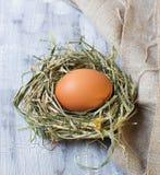 Uovo di Brown in un nido Fotografie Stock Libere da Diritti