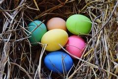 Uovo di colore sulla paglia immagine stock