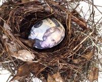 Uovo di nido con l'uovo spostato dollaro immagini stock libere da diritti