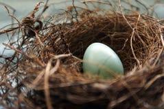 Uovo di nido dei pettiross Fotografia Stock