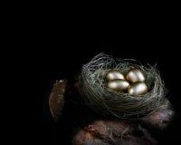 Uovo di nido di pensione Fotografia Stock Libera da Diritti