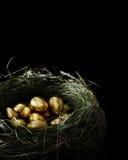 Uovo di nido finanziario Fotografia Stock