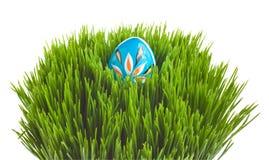 Uovo di Pasqua Blu su erba verde Fotografia Stock