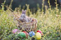 Uovo di Pasqua di caccia del coniglietto di pasqua sul fondo della natura dell'erba verde fotografie stock