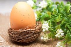 Uovo di Pasqua di Brown nel nido Immagini Stock