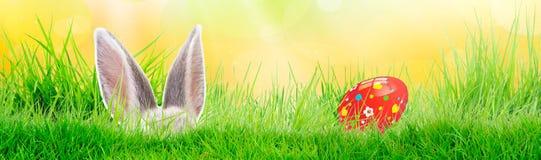 Uovo di Pasqua dipinto a mano su erba con il coniglietto Panorama, insegna Modelli floreali e variopinti della molla e progettazi fotografie stock
