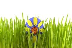 Uovo di Pasqua floreale in erba Immagine Stock