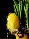 Uovo di Pasqua Giallo Fotografia Stock Libera da Diritti