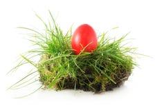 Uovo di Pasqua rosso in un nido di erba, isolato su bianco Fotografie Stock Libere da Diritti