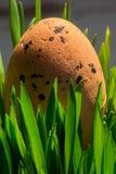 Uovo di Pasqua in struttura a guscio dell'erba verde Fotografie Stock