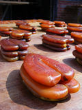Uovo di pesce della muggine Immagine Stock