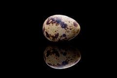 Uovo di quaglie Fotografia Stock Libera da Diritti