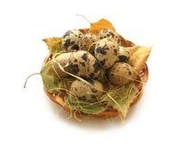 Uovo di quaglie Fotografia Stock