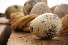Uovo e nido di quaglie fotografia stock