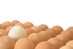 Uovo differente Fotografia Stock Libera da Diritti