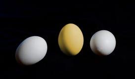 Uovo dorato differente fra il usuale Concetto di successo sul nero Immagini Stock