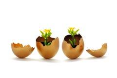 Uovo dorato e fiore giallo Immagine Stock