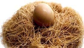 Uovo e fondo bianco alto vicino del nido fotografia stock