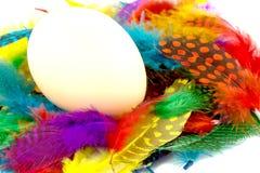 Uovo e piume Immagine Stock