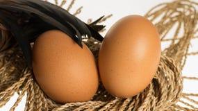 Uovo e pollo Immagini Stock