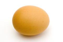 Uovo fresco Fotografie Stock Libere da Diritti