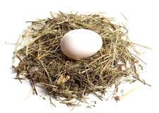 Uovo fresco bianco su fieno Fotografie Stock Libere da Diritti