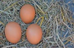 Uovo fresco del pollo su fondo di legno Fotografia Stock Libera da Diritti