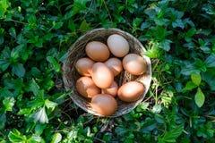 uovo fresco in nido Fotografie Stock