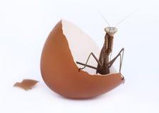 Uovo nato Fotografia Stock Libera da Diritti