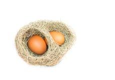 Uovo nei nidi dell'allodola Fotografia Stock