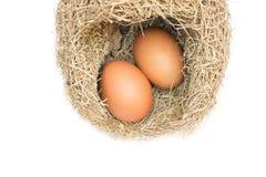 Uovo nei nidi dell'allodola Immagini Stock