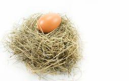 Uovo nel nido Immagini Stock Libere da Diritti