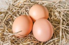 Uovo nel nido del fieno Fotografie Stock Libere da Diritti