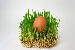 Uovo nella fine naturale di dieta sana di dieta di forma fisica del germe di grano dell'erba verde su immagini stock