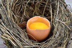 Uovo nelle coperture del nido degli uccelli Immagine Stock Libera da Diritti