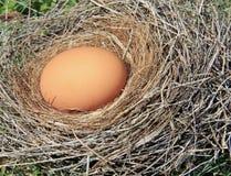 Uovo in nido Fotografia Stock
