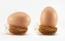 Uovo in nido fotografie stock libere da diritti