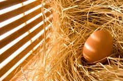 Uovo in paglia dell'azienda agricola Fotografia Stock