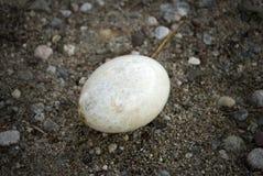 Uovo perso Fotografia Stock