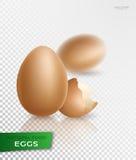Uovo realistico Vettore Immagini Stock Libere da Diritti