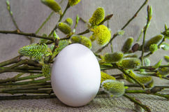 Uovo, salice, purulento-salice, ramo, lanuginoso, bianco, germoglio Immagine Stock Libera da Diritti