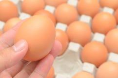 Uovo selezionato della mano in cartone Fotografie Stock Libere da Diritti