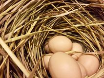 Uovo su paglia di riso Immagine Stock Libera da Diritti