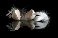 Uovo sul nero Immagine Stock
