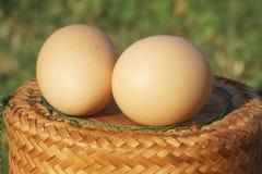 Uovo sulla scatola Immagine Stock