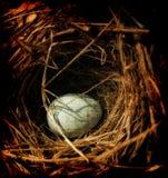 Uovo in un nido Fotografia Stock Libera da Diritti