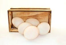 Uovo in una scatola Immagini Stock