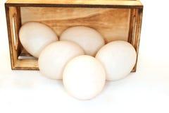 Uovo in una scatola Fotografie Stock Libere da Diritti