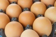 Uovo, uovo del pollo Immagine Stock