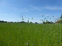 Upłynnienie rośliny w łące obrazy royalty free